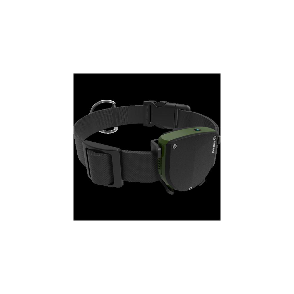 Pet-Tracker Infiniton - 1
